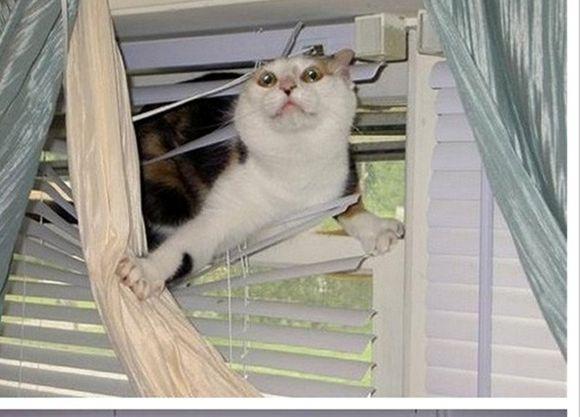 catsblinds7