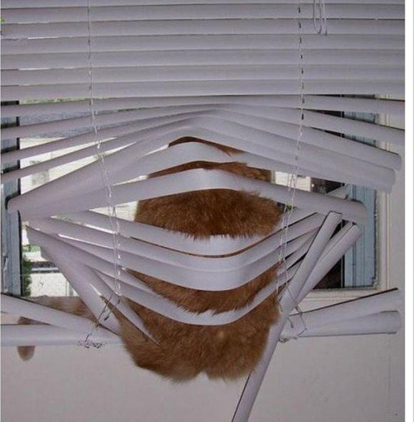 catsblinds8