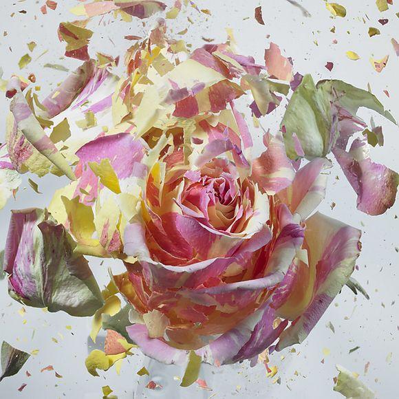 Flower Explosion by Martin Klimas