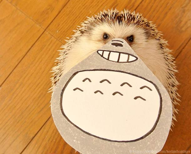 Hedgehog marutaro1