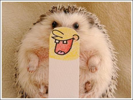 Hedgehog marutaro10