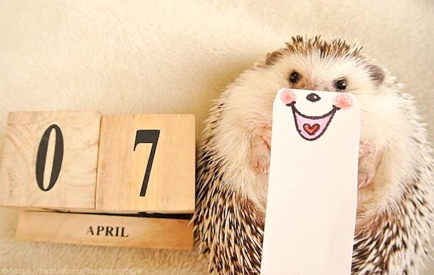 Hedgehog marutaro13
