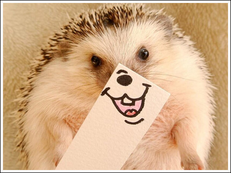 Hedgehog marutaro2