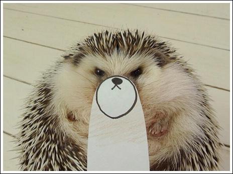 Hedgehog marutaro4
