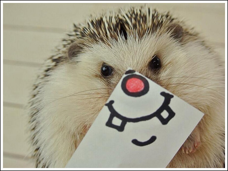 Hedgehog marutaro5