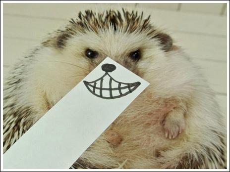 Hedgehog marutaro6