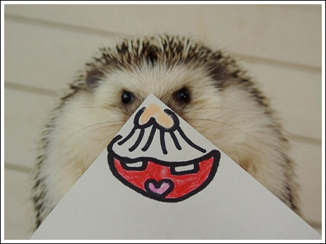 Hedgehog marutaro8