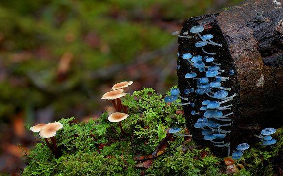 fungi17