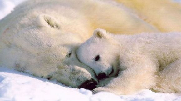 Polar bear and here cub