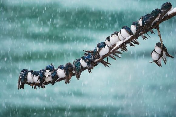 birds on a branch in winter