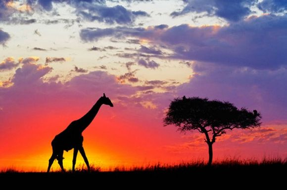 Animals beautifully captured in silhouette
