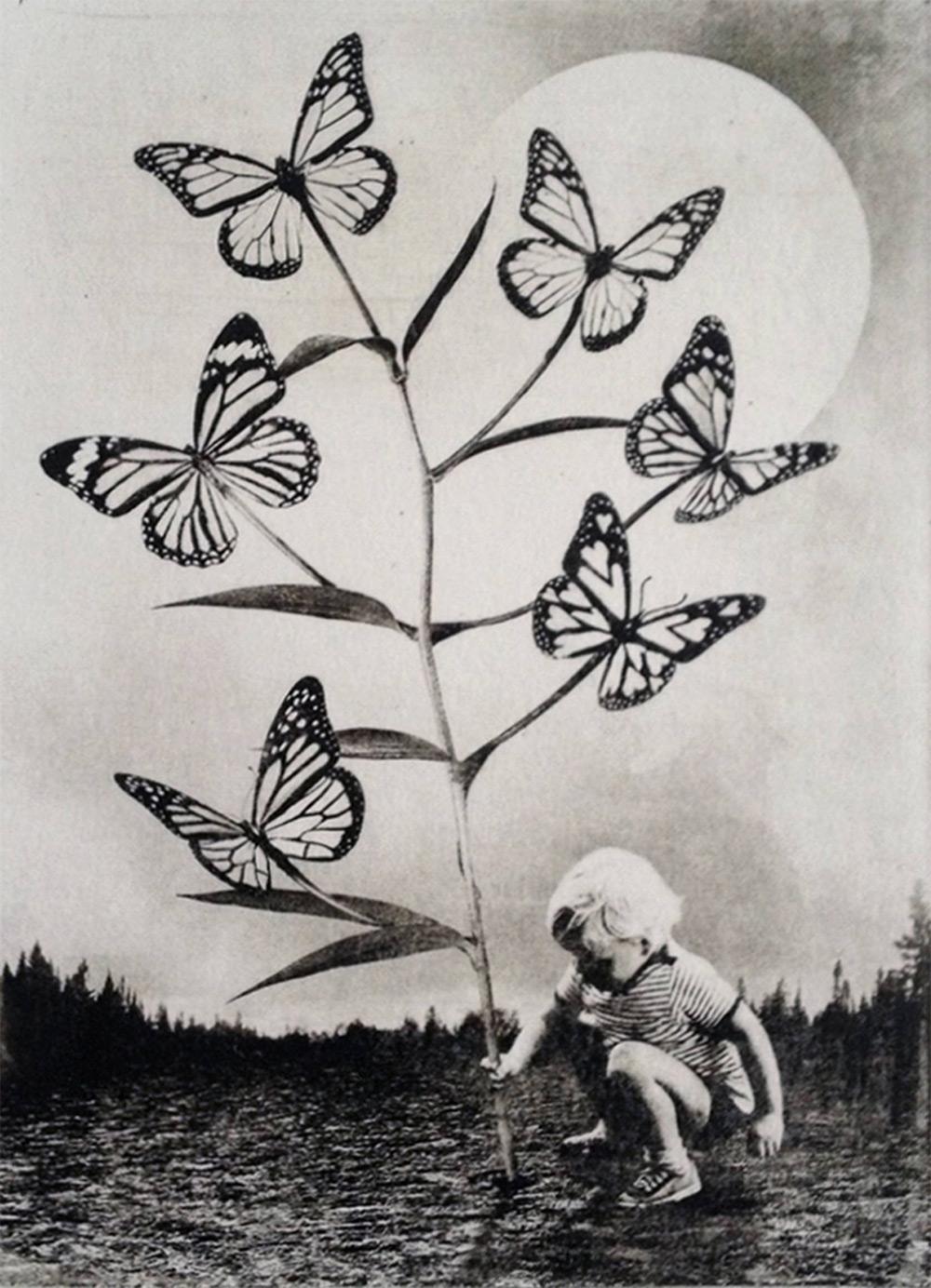 butterfly plant dark scenes