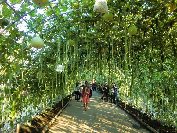Gourd Tunnel is in Rachapruek Park, Chiang Mai, Thailand