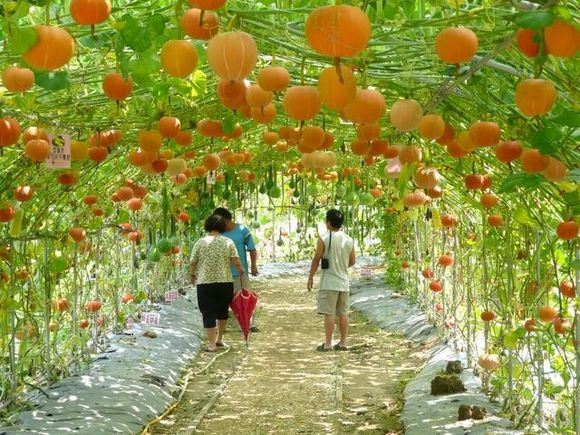 Pumpkin tunnel in Taiwan