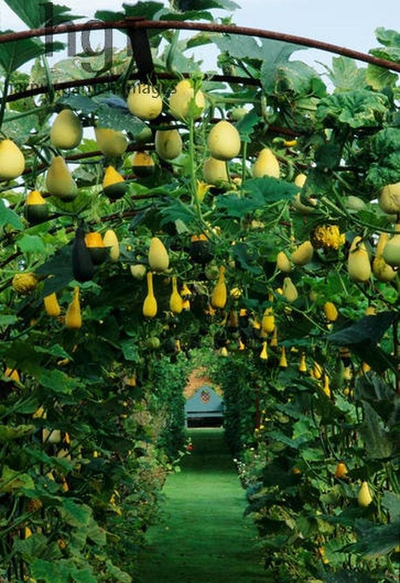 Gourd Arch is in Helmingham Hall, Stowmarket, Suffolk