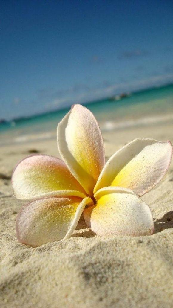 summer photos Hawaii
