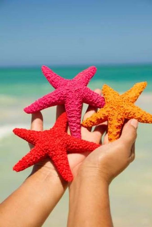 summer photos sea stars