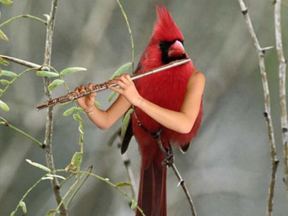 photoshopbirds-0005