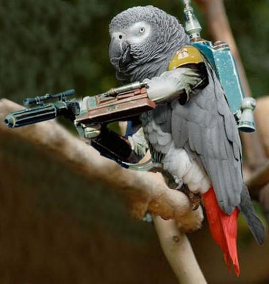 photoshopbirds-0017