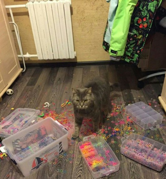 cat making a mess